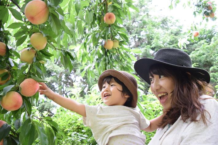 子供と行きたい山梨の桃狩りスポット6選!帰りに八ヶ岳でアウトレットショッピング