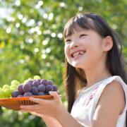 栃木で人気のぶどう狩りスポット7選!おすすめアウトレットショップも紹介