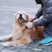 千葉でペットと泊まれる宿10選!愛犬との旅行におすすめの宿とは?