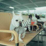愛犬をもっと可愛くおしゃれに!おすすめのペット服ブランド7選