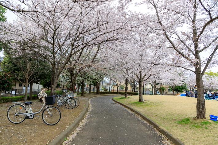 茨城県 桜